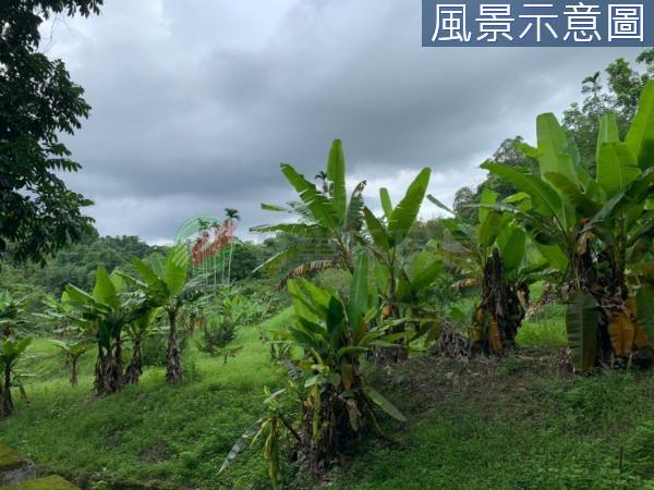有巢氏南投縣買屋-#實境VR#中寮小河流水美麗橘子園優質農地照片15